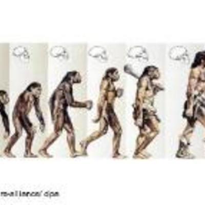 Human Origins  timeline