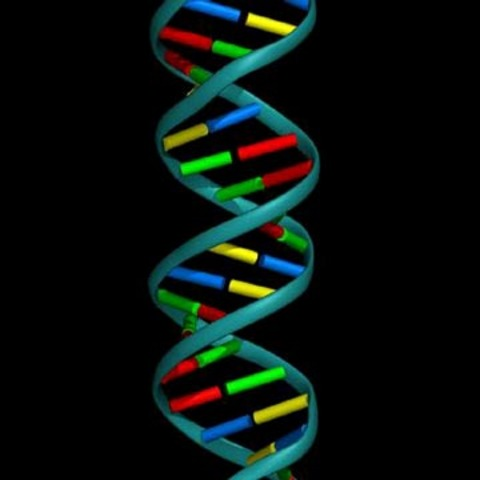James Watson and Francis Crick discover the DNA double helix