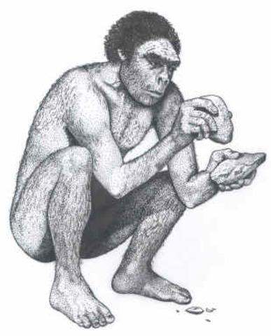 Homo Erectus (continued)