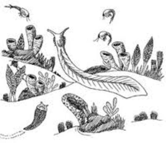 Cambrian 1911-1923