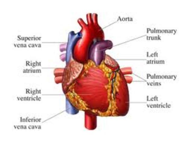 Christian Barnard preformed the worlds first heart transplant surgery