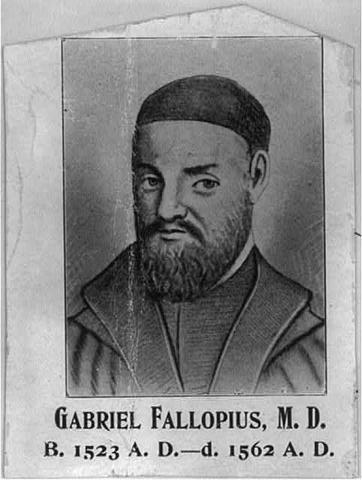 Gabriel fallopius: discovered fallioian tubes in women