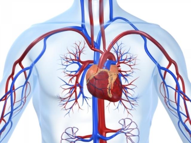 Willam Harvey: Blood Circulation and Heart