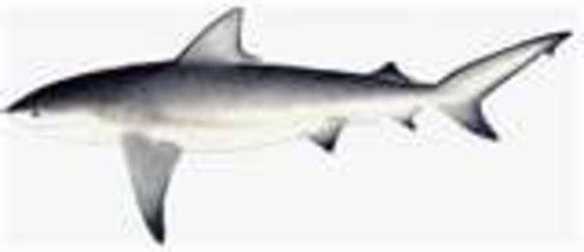 1st vertebrates and 1st fish