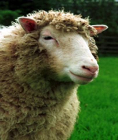 Dolly the sheep is first mammal cloned