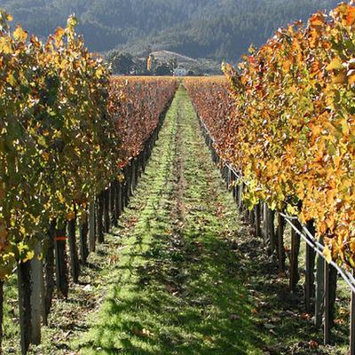 Wangaratta & District - Vineyards timeline
