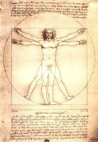 Leonardo's Studies of Anatomy