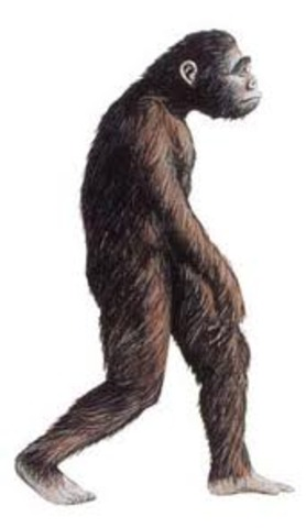 1AM: Australopithecus afarenis begins to walk upright