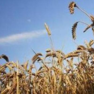 Landbrugsudvikling  timeline