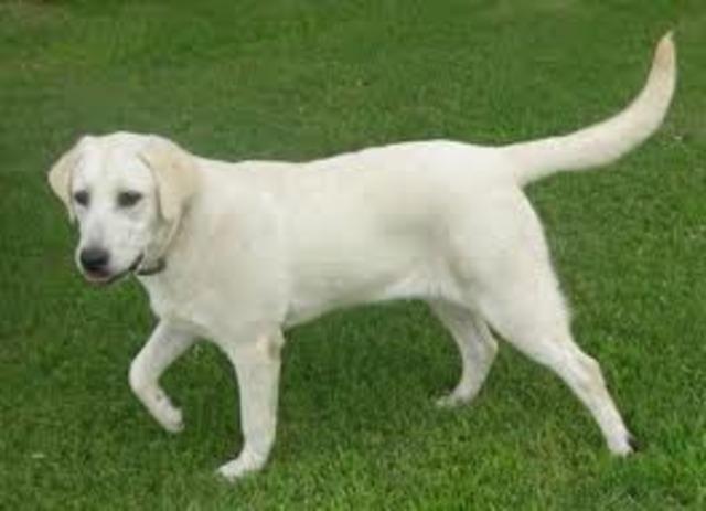 My Dog, Cisco