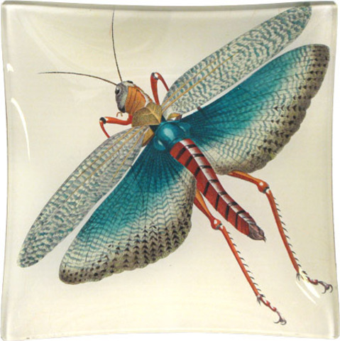 First winged insects