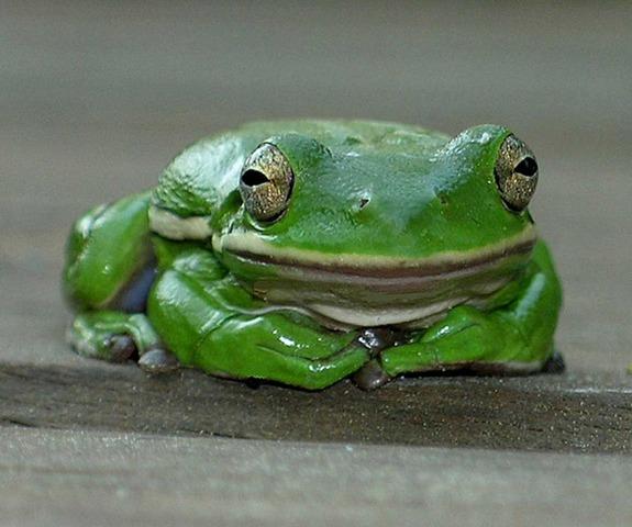 First amphibians