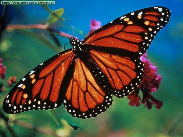 First butterflies