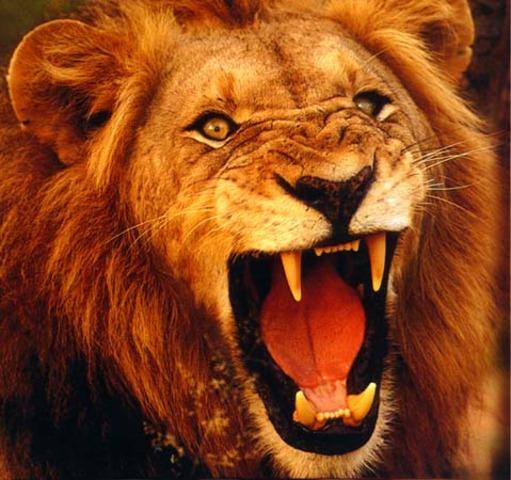 Labor 1-  Kill the Lion of Nemea