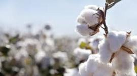 Cotton, Slavery and the South 1790's - 1850's  timeline