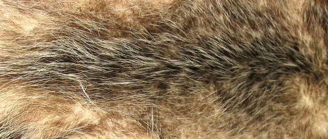 animal fur clothing for keeping you warm.