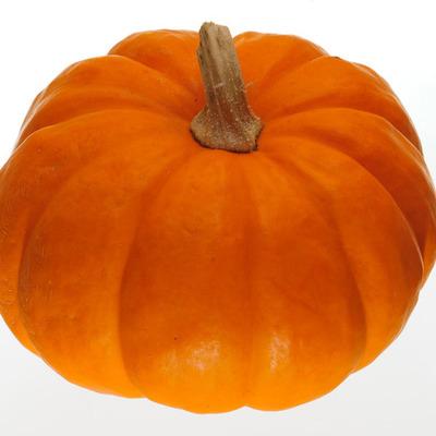 Life of a Pumpkin  timeline