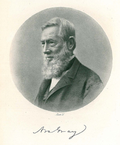 Bailey serves as an assistant to Asa Gray
