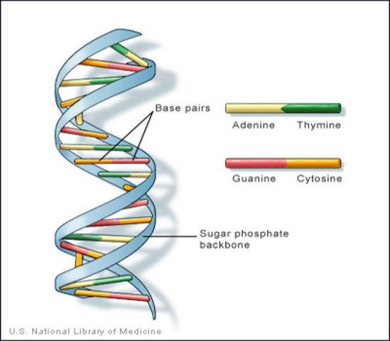 The genetic material is described as a double DNA Spiral.