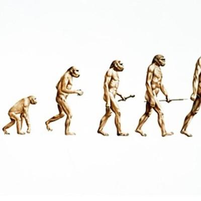 Evolution/Natural Selection Haylie Dennis timeline