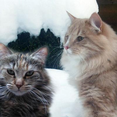 Kittens 6/7 januari 2012 timeline