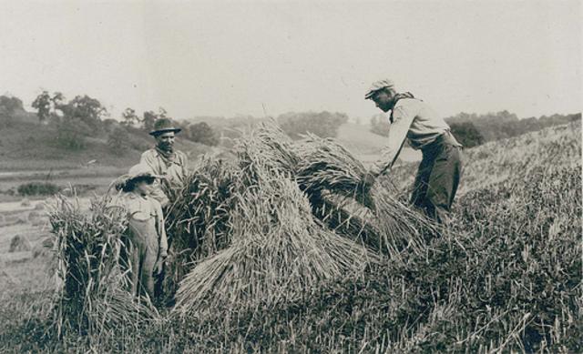 Farm Income falls by 60%.