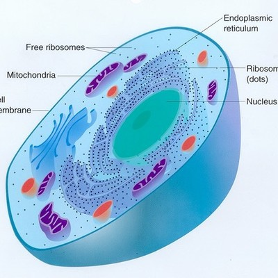 Cell Theory Marcus Mao timeline