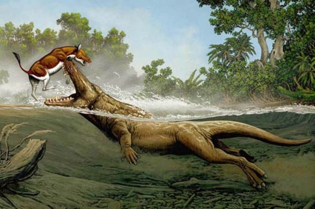 The Ambulocetus: About 50 Million Years Ago