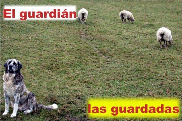 Perros y ovejas