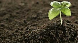 History of Fertilizer Usage timeline