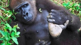 Poaching in Cameroon timeline