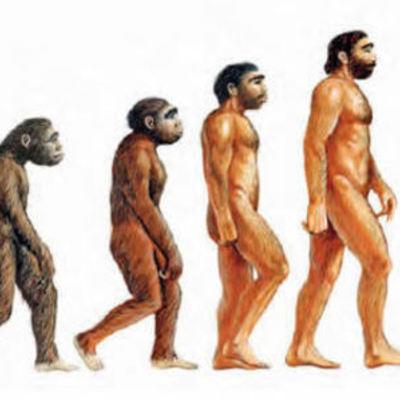 Evolución de los homínidos. timeline