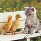 Cute wallpapers cute kittens 10501750 1024 768