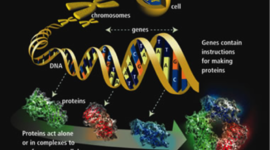 History of Genetics (THIS) timeline