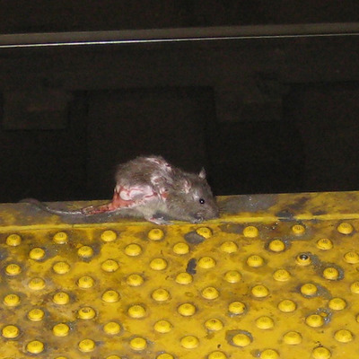 New Yorkers Deserve a Rat Free Subway timeline