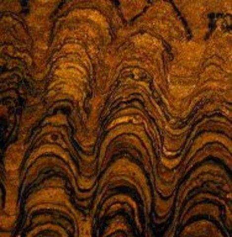 (3.5 BYA) First Fossils