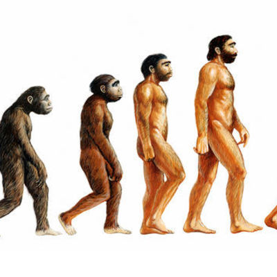 Theory Of Evolution by Means of Natural Selection timeline