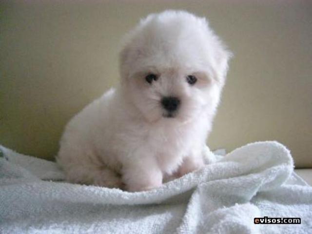 Me compraron un perrito