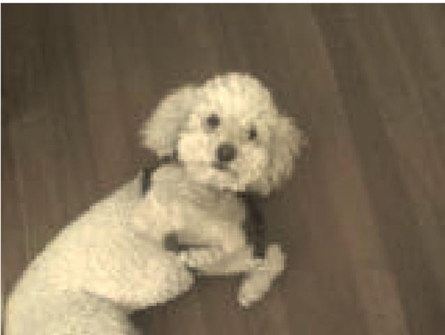 Murio mi Perro