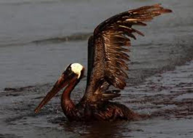 Exxon Valdes Oil spill
