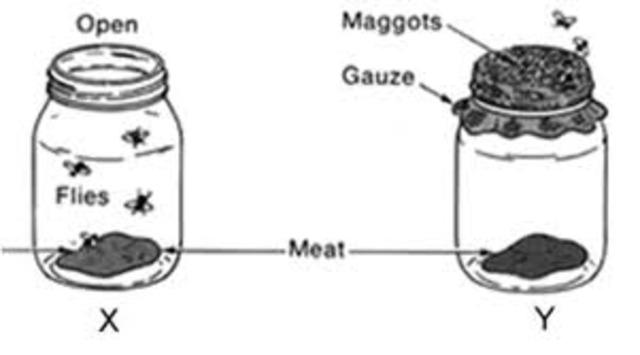 (1600-1700) Redi and microscopes