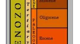 Cenozoic Period timeline