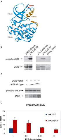 JAK2V617F mutations in myeloproliferative disorders
