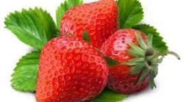 Erdbeer Raps Topfversuch 2012 timeline