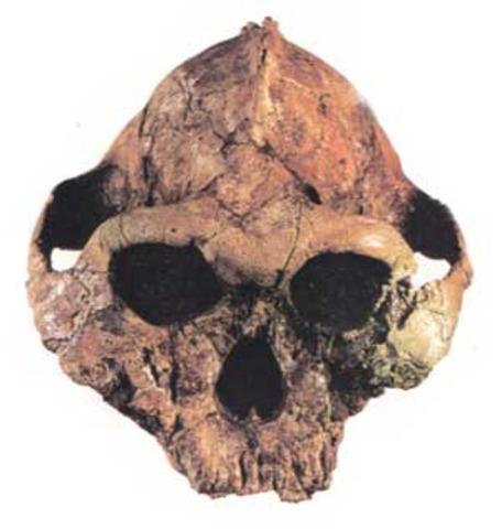 astralopitecus en 4 millones de años a. c