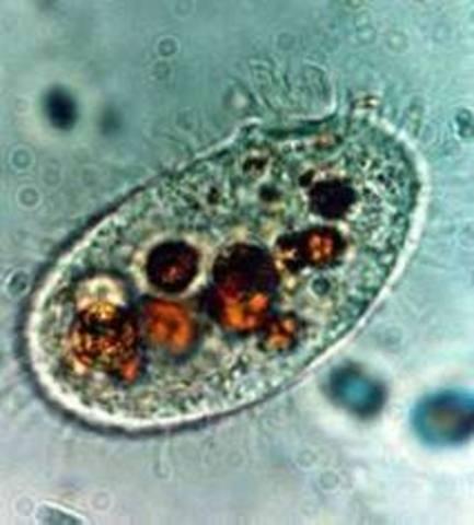 Organismos compuestos por celulas