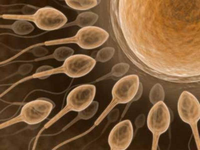 Celulas reproductivas