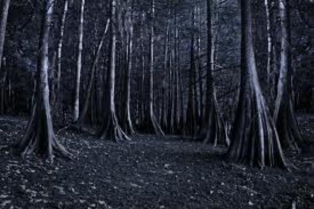 Grimsdell Woods