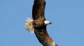 Eagles at Norfolk Botanical Garden timeline