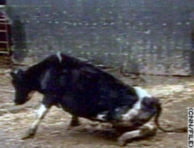 science and technology: mad cow disease (no specific date)